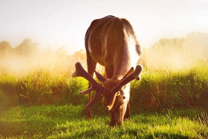 快跟著我們一起來開啟你的尋鹿之旅